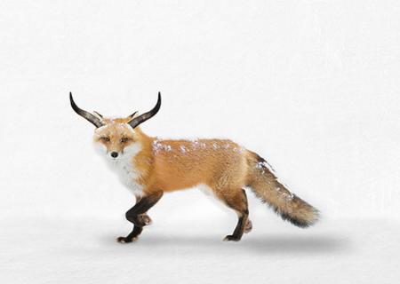 _the-future-of-cold-chain-transportation-fox-masternaut